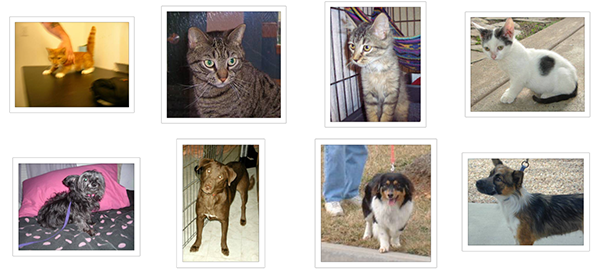 Cats and Dogs Dataset